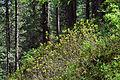 Tux - Naturdenkmal ND 9 39 - Umgebung der Schraubenfallhöhle - V.jpg
