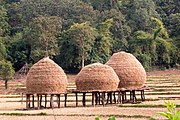 Haystacks on stilts in Paddy fields, North Kanara, India