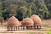 Hay stacks on stilts in paddy field Karnataka
