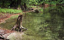 Uferbewuchs am Garrensee