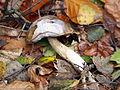 Unidentified mushrooms pic-013.JPG