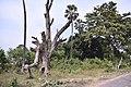 Univerisity of Kalyani campus 17.jpg