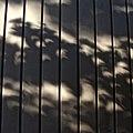 Urban forest solar eclipse (15638773532).jpg