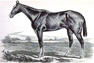 1876 Kentucky Derby - 1876 Kentucky Derby winner Vagrant in an 1877 drawing by T.J. Scott