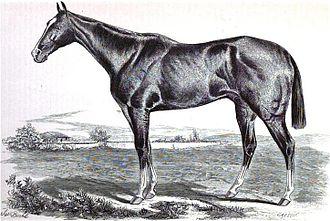 Vagrant (racehorse) - Image: Vagrant (horse)