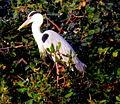 Vedanthangal Bird Sanctuary 14.JPG