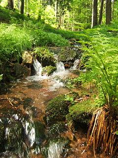 Vessertal-Thüringen Forest biosphere reserve in Thuringia, Germany