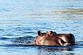 Victoria Falls 2012 05 23 1415 (7421833106).jpg