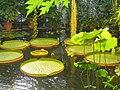 Victoria house - Oslo Botanical Garden - IMG 9013.jpg
