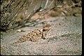 Views at Joshua Tree National Park, California (38a24169-baf6-4d8c-8637-22c9f795107e).jpg
