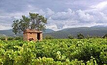 220px-Vineyards_in_Villars%2C_Vaucluse.j