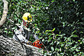 Virginia Guard soldiers clear fallen trees 110828-A--293.jpg