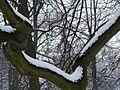 WIELKANOC 13r. Park w bajecznej zimowej szacie ,-)) 39 - panoramio.jpg