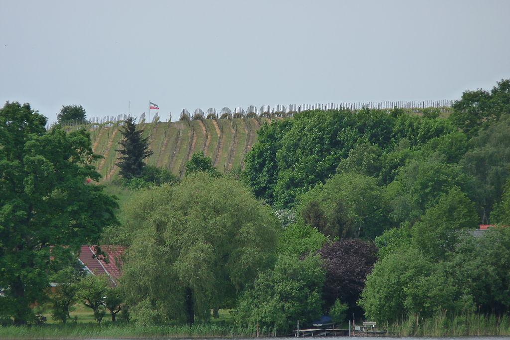 Der Werderaner Wachtelberg, nördlichste eingetragene Lage für Qualitätsweinanbau (QbA) in Europa und der Welt