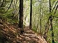 Wald Altenburg Kaltern 1.jpg
