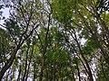 Wald im Wolfstalflur Tauberbischofsheim 02.jpg