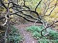 Wanderweg Urwaldsteig - panoramio (1).jpg