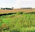 Weed on Donnie's Farm, Perkins, IA 9-2005 (6576502605).jpg