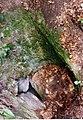 Weislich-barlang, az akna bejárat kívülről.JPG