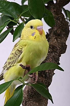 DataLife Engine Версия для печати Птицы.