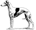 Whippet (PSF).png