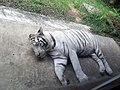 White Tiger, Vietnam.jpg