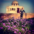 Wild flowers with hiran minar in the background.jpg