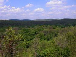 Wilderness in Conyngham Township, Luzerne County, Pennsylvania in late May