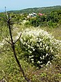 Wildflowers on Solta Island - Croatia.jpg