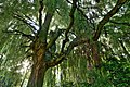 Willow, Pickering Park, Hull - panoramio.jpg