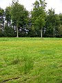 Witham Park Woods - geograph.org.uk - 1476801.jpg