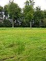 Witham Park Woods - geograph.org.uk - 1476801.jpg