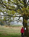 Woman in Red Looking at a Tree.jpg