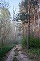 Woods near Hodonín 2020 01.jpg