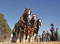 Work horses (10062578873).jpg