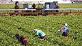 Working the Field, Oxnard California (7618167914).jpg