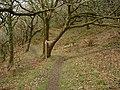 Worthygate Wood - geograph.org.uk - 71822.jpg