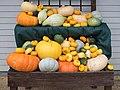 Wrest Park pumpkins.jpg
