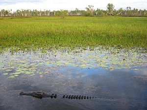 Effects of global warming on Australia - Wetlands in Kakadu National Park