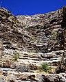 Yucca on Steps (5508682952).jpg