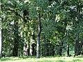 Zabłudów park dworski 6.JPG