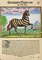 Zebra - Regnum Congo.jpg