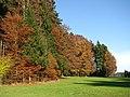 Zeller Wald-GO12.jpg