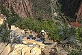 Zion Nat'l Park - the spectacular Angel's Landing trail is certainly not for the faint of heart.!! - descending is a little airy - (20111147345).jpg