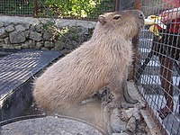 Zoo in Yalta 007.jpg