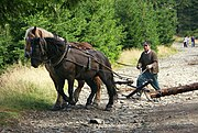 Horse logging in Poland