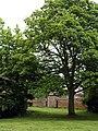 'Cally' in Hedon - geograph.org.uk - 825212.jpg