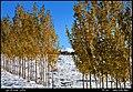 (((پاییز در جاده چاوان مراغه))) - panoramio.jpg