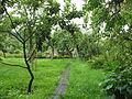 Аптекарский сад с огородами 03.JPG