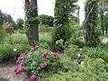 Ботанічний сад ДНУ 43.JPG